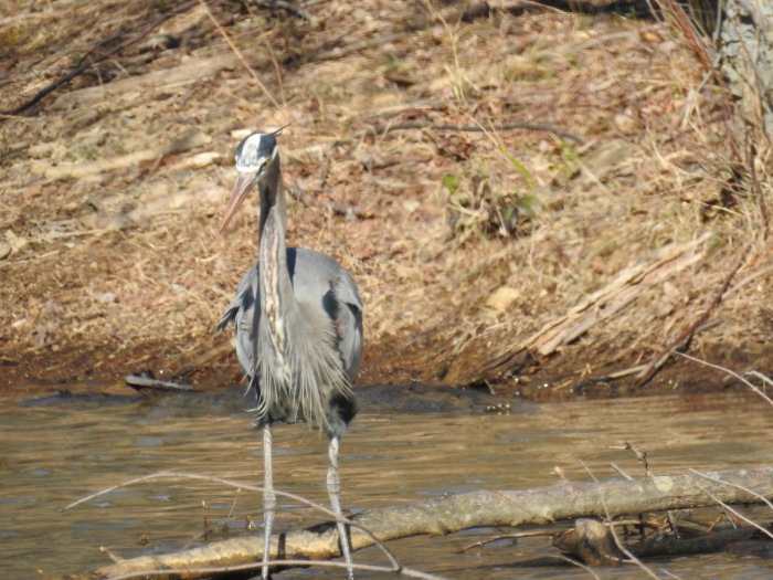 Gimpy Girl Goes Birding – a 2017 mid-Atlantic, physically accessible birding 'Big Year'
